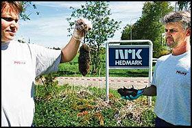 RATTUS KRINGKASTUS: Skadedyrbekjemperne Bjørn Eide og Ivar Haugan bruker kjemisk krigføring for å drepe store mengder jordrotter på NRK-tomta ved Domkirkeodden på Hamar. Foto: Lars Erik Skrefsrud