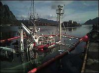 Hvalvenner: - Vi senket båten