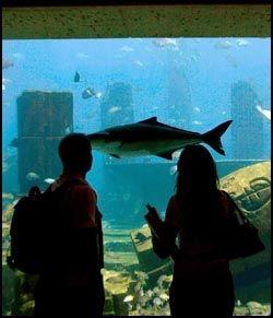 POPULÆRT: Akvariet i nyåpnede Palm Atlantis Hotel. Foto: AFP.