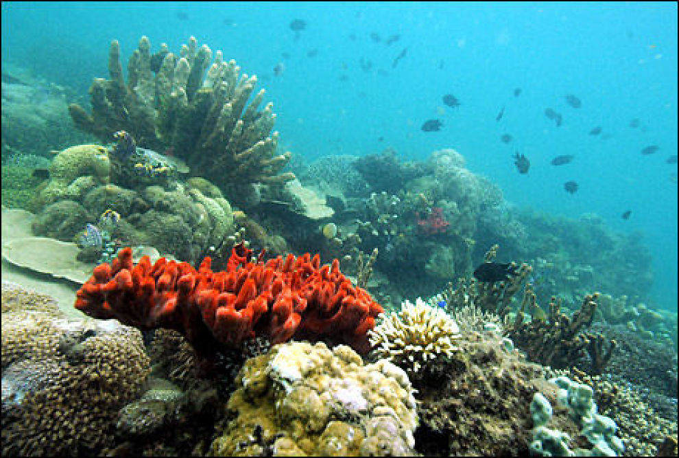 VAKRE: Korallrev utenfor Fillippinene. Foto: AFP