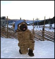 DØLABAMSE: Kvitfjellbamsen er klar til å underholde barna. Foto: Kvitfjell alpinanlegg.