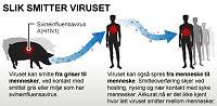 Person testes for svineinfluensa i Haugesund