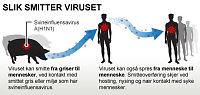 Dette bør du vite om svineinfluensa
