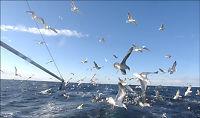 Barentshavet mest påvirket av klima og fiske
