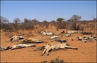 Ny klimarapport: - Vold og konflikter vil øke