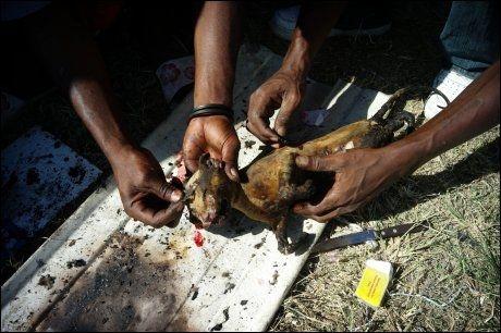 NØD: To jordskjelvofre renser en grillet katt i mangel på mat. Foto: AFP