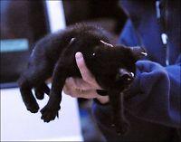 Kvinne ville selge piercede kattunger