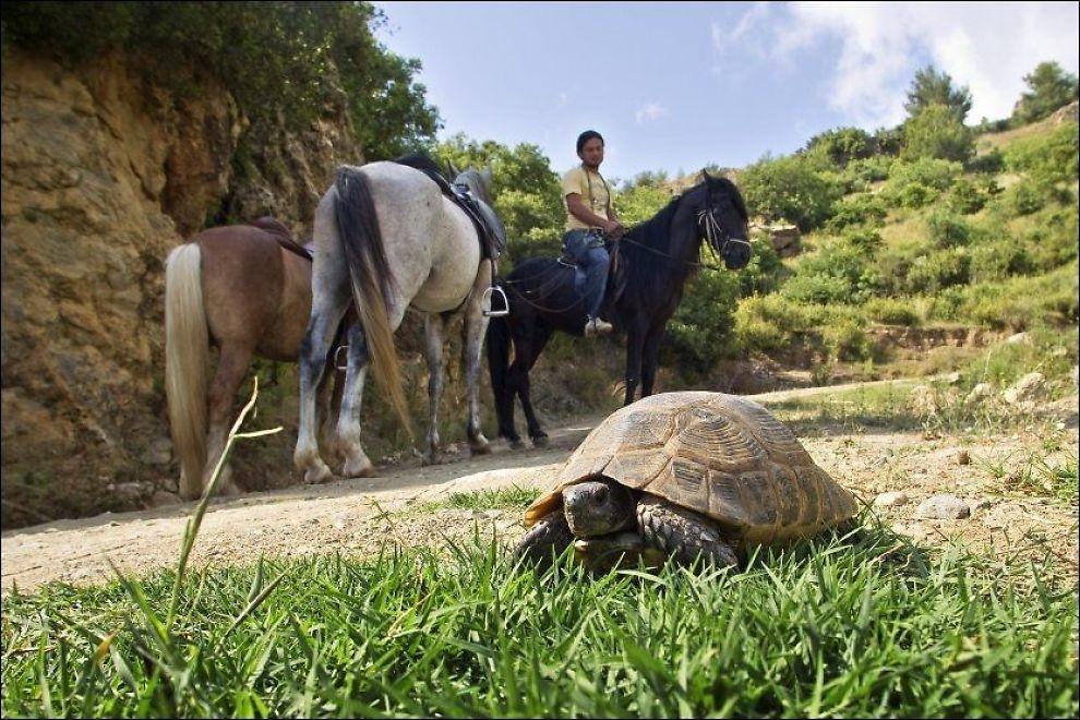 PÅ FJELLTUR: Rett som det er møter vi en skilpadde på stien, når Mustafa Özkan tar oss med på ridetur i fjellet. Foto: Gisle Oddstad
