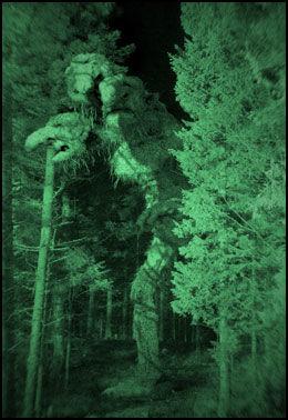 FLERE TYPER: I «Trolljegeren» får man nærkontakt med en rekke forskjellige troll. Foto: SF Norge AS