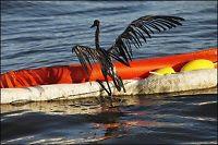 Obama vil stille BP til ansvar