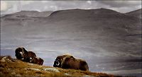- Her er de 25 beste reisemålene i Norge