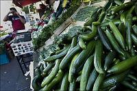 E-coli-agurker sprer frykt i Europa