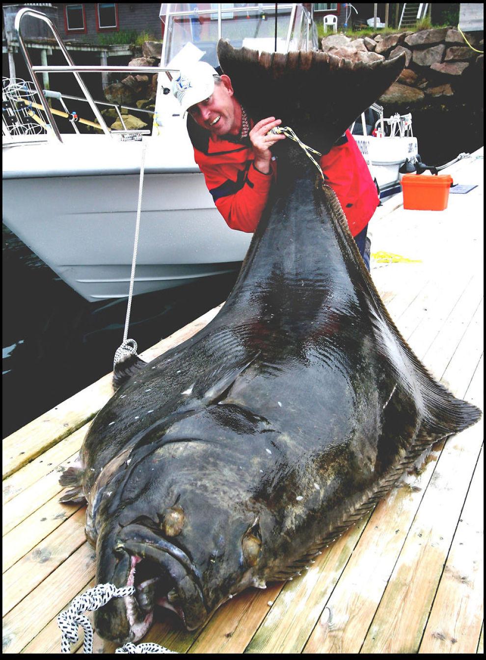 HEITE FOR EI KVEITE!: Det ble stang inn for Reinhard Wuhrmann på fiskeferien på Senja. Her gliser han sammen med det som skal ha vært en verdensrekordfisk - på småpene 245 kilo. Foto: BNPS.CO.UK