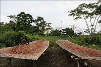 - Millioner av barn slaver i Vest-Afrika