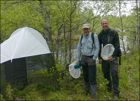 FANGES: Forskerne Geir Søli (til venstre) og Torbjørn Ekrem, har blant annet brukt store telt til å lokke de uoppdagede artene til seg. Foto: Elisabeth Stur