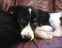 Hunden «Bamse» ble drept med gift