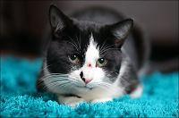 Katten Cookie overlevde kuleskudd i hodet