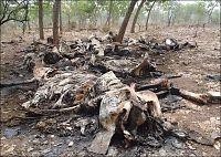 Over 450 elefanter skutt i Kamerun
