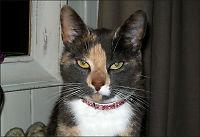 Katten Thelma (2) ble funnet torturert og drept
