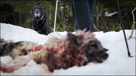 VENNER: Det var Kanga (bak) som fulgte sporene innover i skogen før hun fant Wendy drept. Foto: Jørgen Braastad/VG