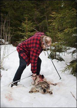 UFLAKS: Oddbjørn Rosendal mener det var uflaks at ulven fant Wendy da de var ute og gikk tur. Foto: Jørgen Braastad/VG
