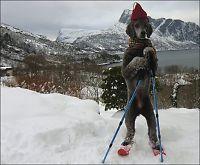 Zanto (6) er en hund etter ski