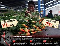 Ikke bare rosenrød import fra verdens fattigste land