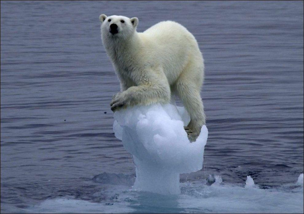 KLIMASKEPSIS: En ung isbjørn på et ørlite isfjell øst av Edgeøya, Svalbard. En ny undersøkelse viser at fire av ti nordmenn mener at alvorlighetsgraden ved klimaendringer blir overdrevet. Foto: NTB SCANPIX