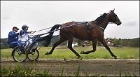 Her kusker VG Norges sprekeste hest