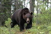 Her kan du få nærkontakt med ville dyr i Norden