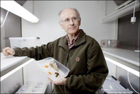 SNEGLE-PEIL: Professor Arild Andersen, spesialist på iberiasneglen som de seneste år har invadert Norden. Her fotografert i laboratoriet ved Bioforsk, Universitet for miljø- og biovitenskap på Ås. Foto: Kyrre Lien / Scanpix