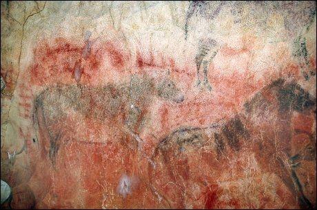 HEST ER BEST? To meter lange malerier av hester i Tito Bustillo-grotten i Spania. Hestemaleriene ligger over eldre, røde malerier. Foto: AFP PHOTO / SCIENCE / Courtesy of Rodrigo De Balbín Behrmann