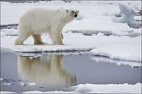 Rekordlite is observert i Arktis