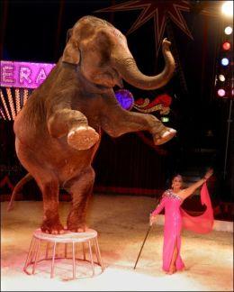 VIL BEHOLDE SIRKUSELEFANTER: Elefanten Baba - her i aksjon på Cirkus Merano - får støtte av landbruksminister Trygve Slagsvold Vedum. Foto: Dagfinn Kristiansen