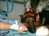 Her blir skadede JaJo gjenforent med hundeføreren