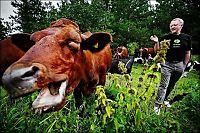 Knuser mytene om økologisk mat