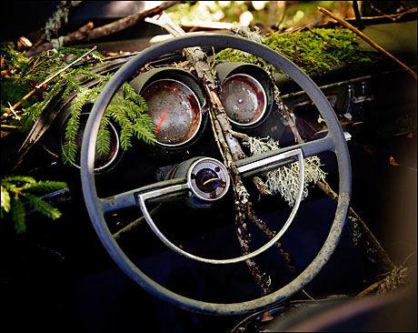TIL SLUTT SEIRER NATUREN: Sakte, men sikkert taper Ivansson-brødrenes hundrevis av biler kampen mot naturen. Noen metaller holder ut lenger enn andre. Foto: Line Møller