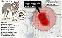 Oslopolitikere: - Ja til ulv i Østmarka