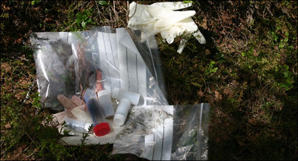 BJØRNE-ÅSTED: CSI-ustyr i skogen. Forskerne samler alle tilgjengelige spor på åstedet. Foto: Sam Steyaert
