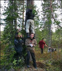 OPP I TRÆRNE: Forskerne må noen ganger klatre høyt i trærne for å finne alle spor etter dramaet. Foto: Sam Steyaert