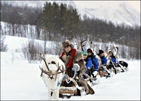 SATSER SERIØST: Camp Tamok satser stort og seriøst på vinterturisme. Her har Roar Kemi tatt med seg en gruppe britiske turister på reinsdyrsafari. Foto: Terje Mortensen