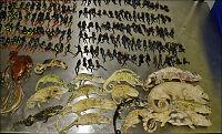 Fant hundrevis av døde dyr i kasser på flyplass