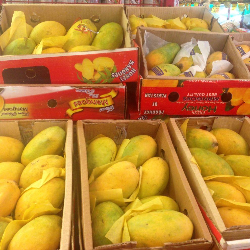 Mango norge kontakt