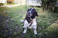 Norges søteste hund har fortsatt ikke et hjem
