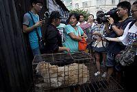 Yang (65) bruker pensjonen på å redde hunder fra Yulin-festivalen