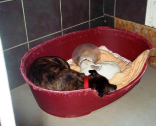 <p>ALLTID SAMMEN: Buzz og Glenn er alltid ved hverandres side, og sover og spiser sammen.<br/></p>
