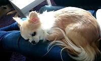Politiet: Rottweiler slet seg løs og drepte hunden Luna (5)