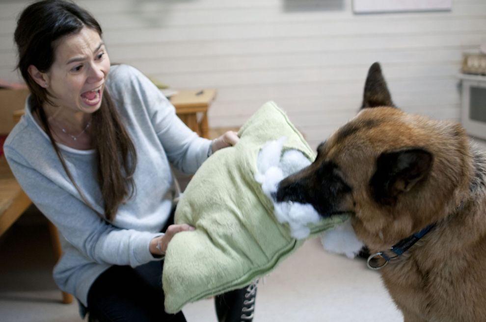 <p>VÆR OBS: Enkelte matvarer kan skade hunden din, selv om de er helt ufarlige for mennesker. Dyrlege Silje Hvarnes forteller hva som er greit å gi og hva du må styre unna.<br/></p>