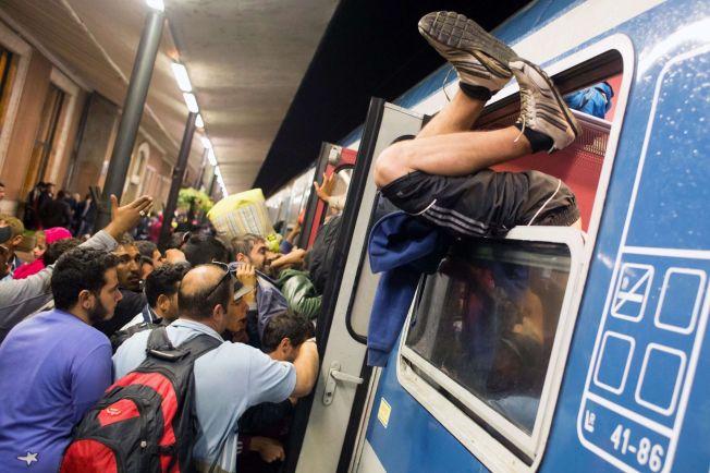 <p>DESPERASJON: En mann klatrer gjennom vinduet på et tog i Ungarn. Ungarn har nettopp ferdigstilt et 41 kilometer langts gjerde av piggtråd på grensen til Kroatia for å hindre flyktningestrømmer over grensen.<br/></p>