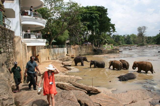 <p>EKSOTISK På Sri Lanka får turistene virkelig nærkontakt med elefantene - som her fra hotellbalkongen i Rambukkana, der elefantflokkene kommer ned til elven for å bade hver dag.</p>